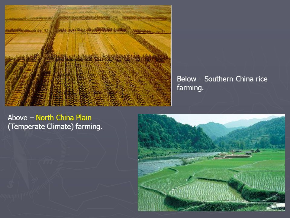Above – North China Plain (Temperate Climate) farming. Below – Southern China rice farming.
