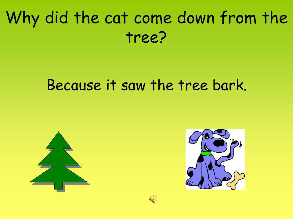 Why did the cat come down from the tree? Because it saw the tree bark.