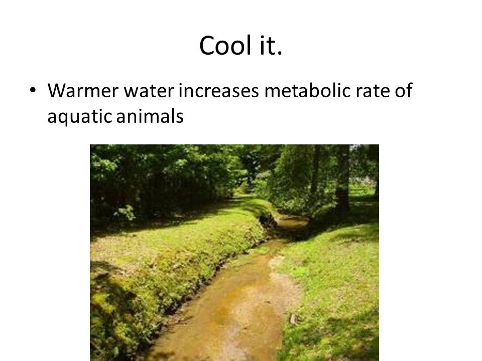 Cool it. Warmer water increases metabolic rate of aquatic animals