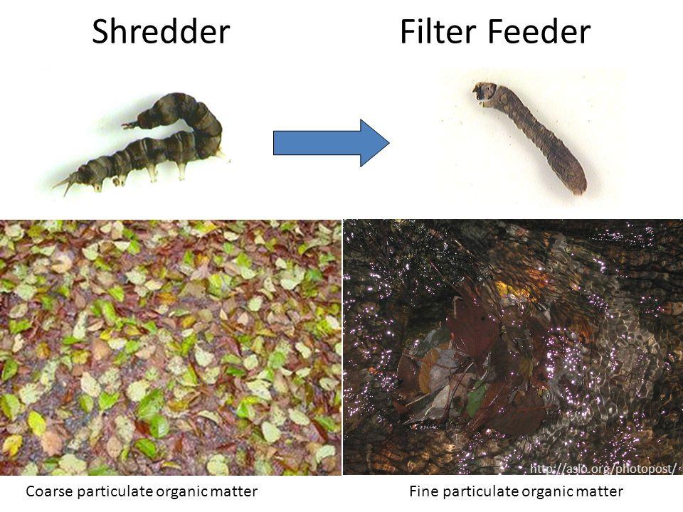 ShredderFilter Feeder http://aslo.org/photopost/ Coarse particulate organic matter Fine particulate organic matter