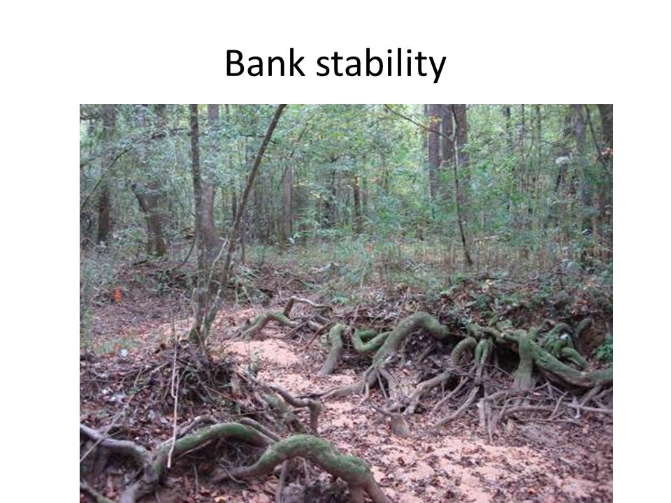 Bank stability