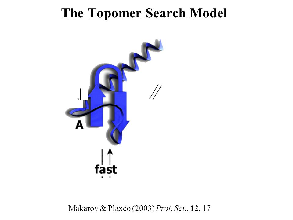 The Topomer Search Model Makarov & Plaxco (2003) Prot. Sci., 12, 17