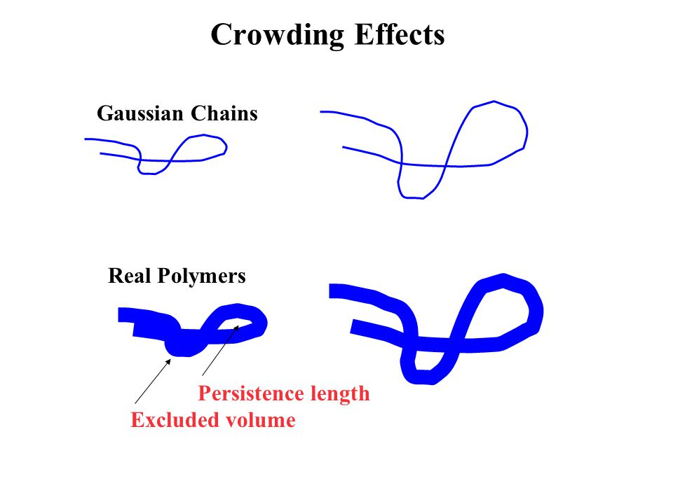Crowding Effects Real Polymers Gaussian Chains Persistence length Excluded volume