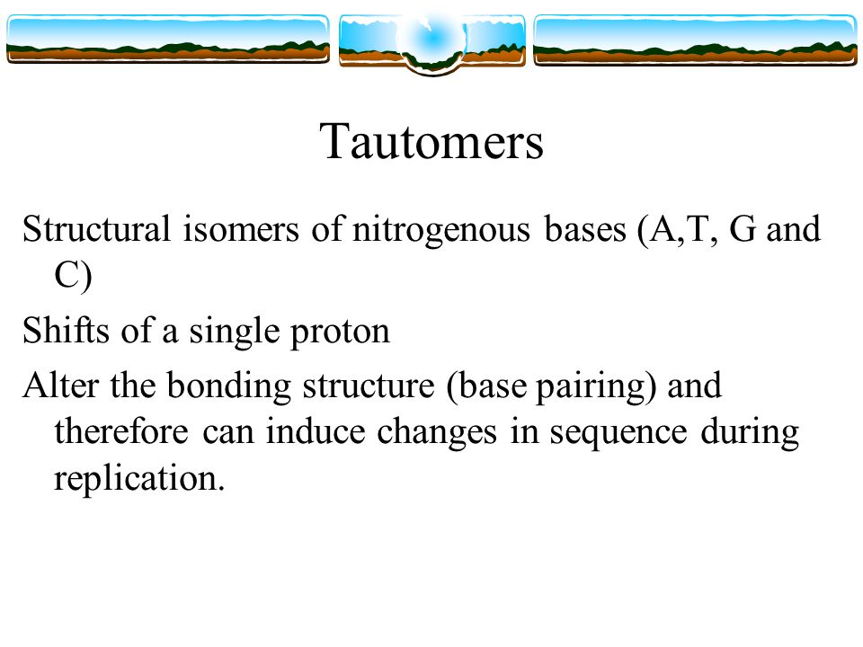 Tautomers Structural isomers of nitrogenous bases (A,T, G and C) Shifts of a single proton Alter the bonding structure (base pairing) and therefore can induce changes in sequence during replication.