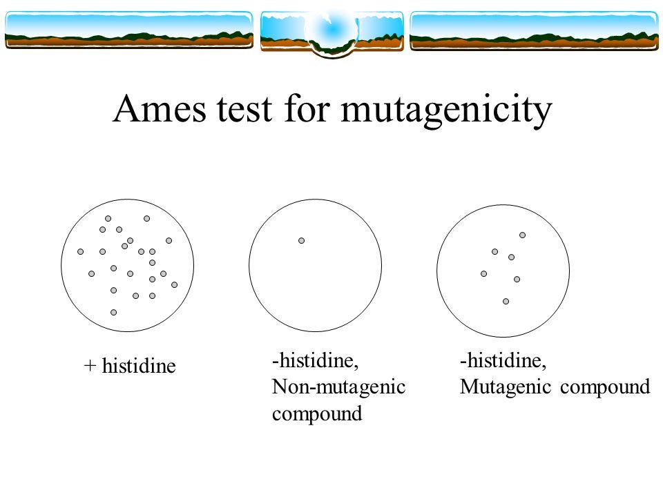 Ames test for mutagenicity + histidine -histidine, Non-mutagenic compound -histidine, Mutagenic compound