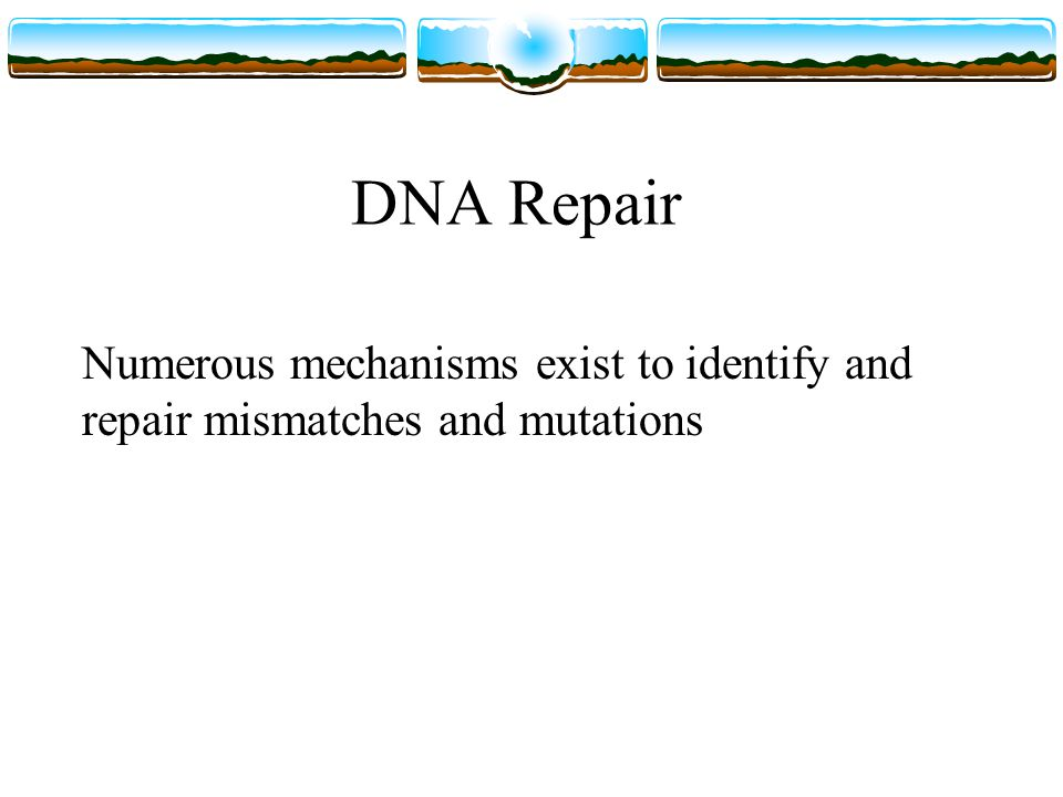 DNA Repair Numerous mechanisms exist to identify and repair mismatches and mutations
