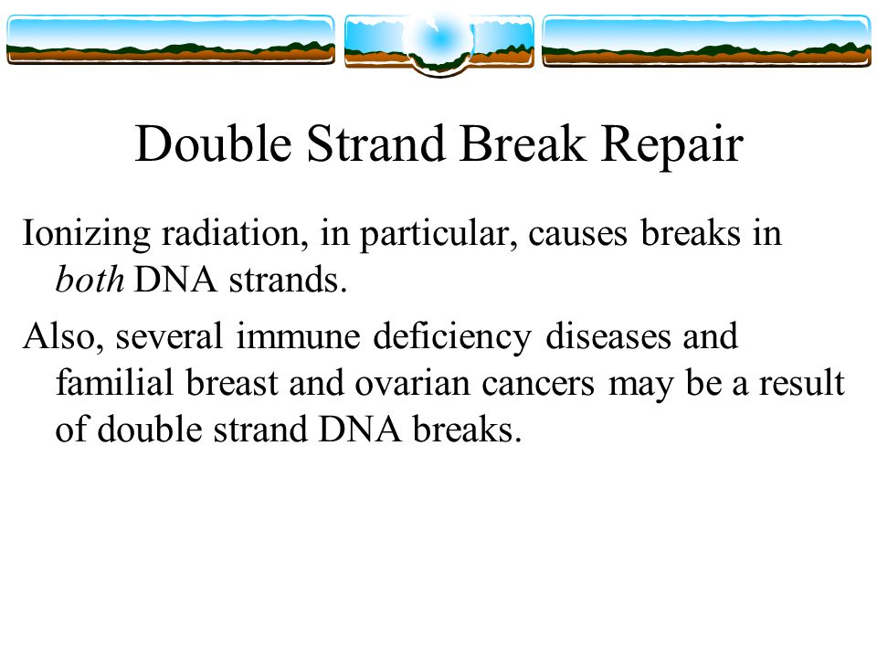 Double Strand Break Repair Ionizing radiation, in particular, causes breaks in both DNA strands.