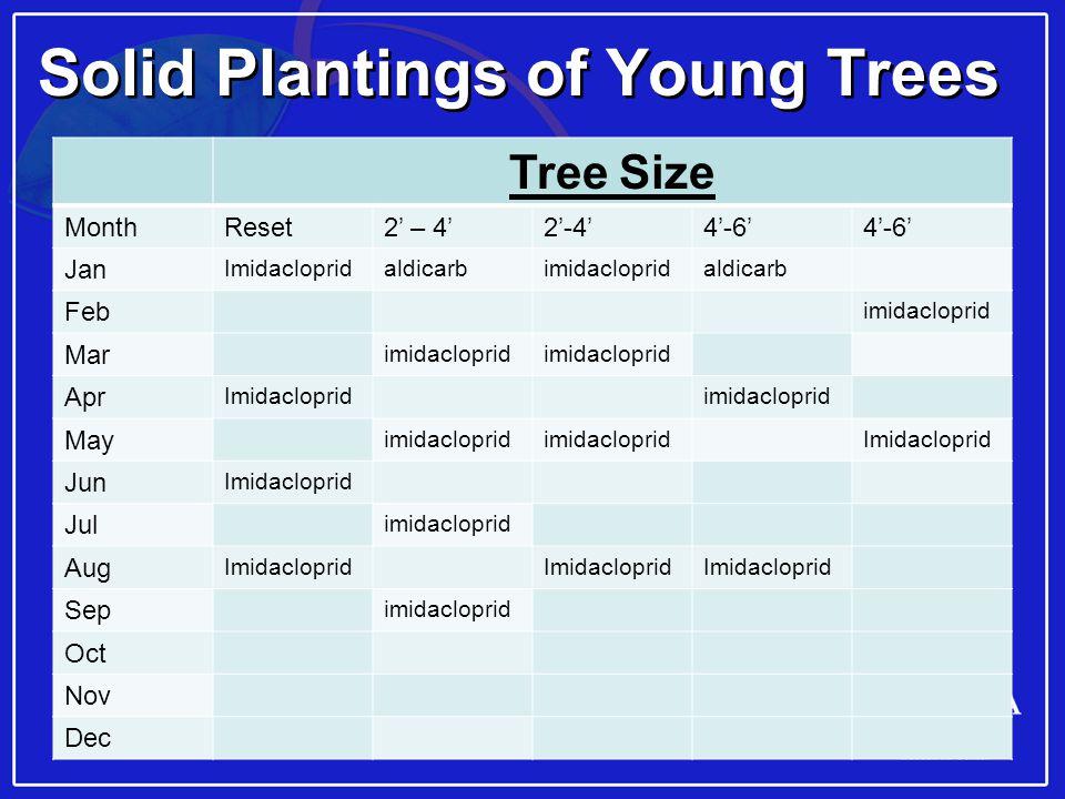 18 Solid Plantings of Young Trees Tree Size MonthReset2' – 4'2'-4'4'-6' Jan Imidaclopridaldicarbimidaclopridaldicarb Feb imidacloprid Mar imidacloprid Apr Imidaclopridimidacloprid May imidacloprid Imidacloprid Jun Imidacloprid Jul imidacloprid Aug Imidacloprid Sep imidacloprid Oct Nov Dec