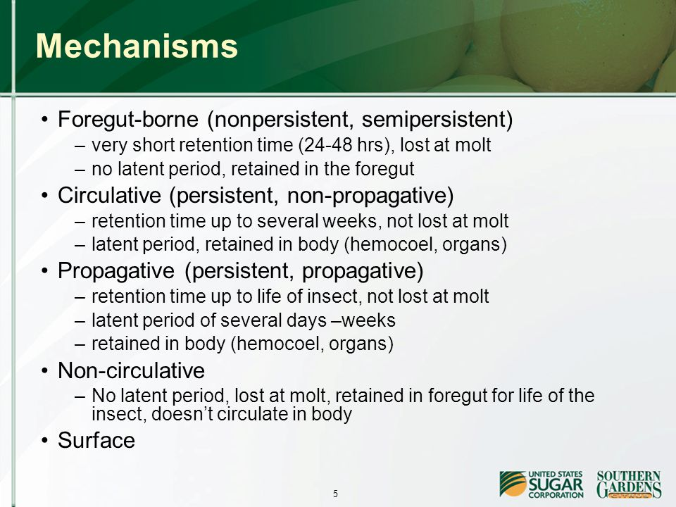 5 Mechanisms Foregut-borne (nonpersistent, semipersistent) –very short retention time (24-48 hrs), lost at molt –no latent period, retained in the foregut Circulative (persistent, non-propagative) –retention time up to several weeks, not lost at molt –latent period, retained in body (hemocoel, organs) Propagative (persistent, propagative) –retention time up to life of insect, not lost at molt –latent period of several days –weeks –retained in body (hemocoel, organs) Non-circulative –No latent period, lost at molt, retained in foregut for life of the insect, doesn't circulate in body Surface
