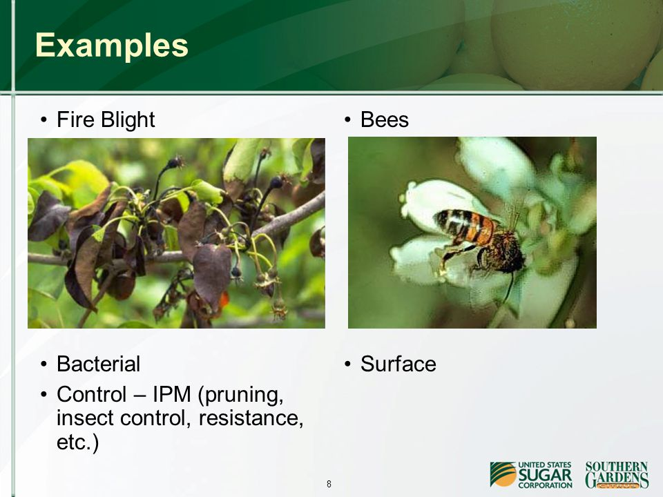 8 Examples Fire Blight Bacterial Control – IPM (pruning, insect control, resistance, etc.) Bees Surface