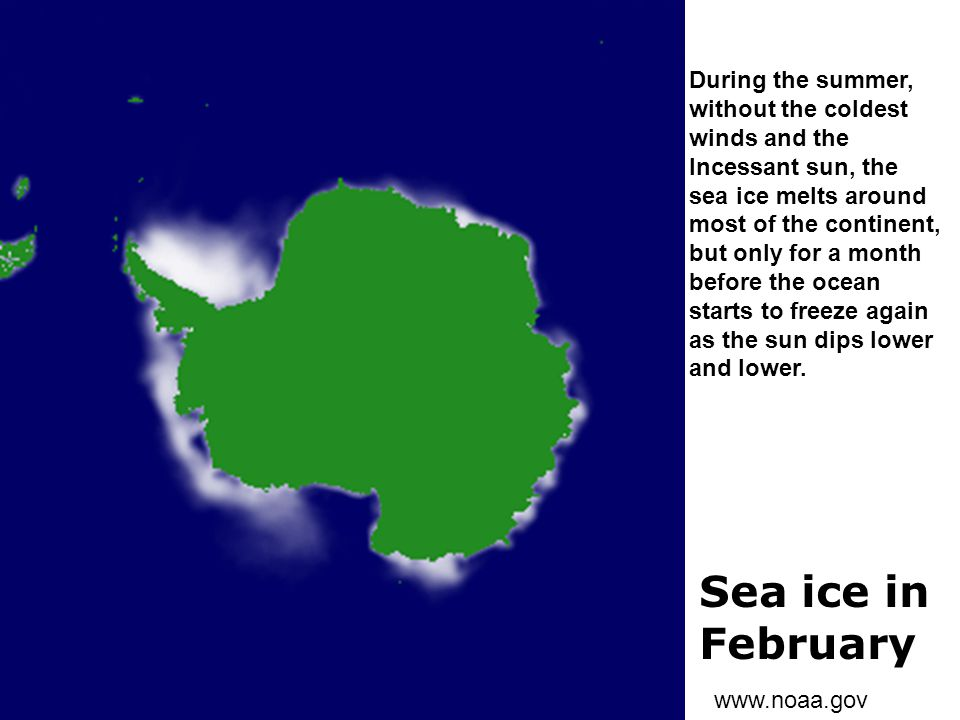 Sea ice in February www.noaa.gov During the summer, without the coldest winds and the Incessant sun, the sea ice melts around most of the continent, b