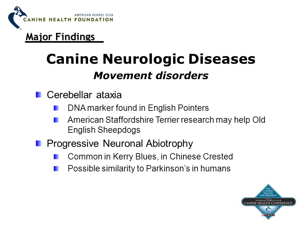 Major Findings Canine Neurologic Diseases Movement disorders Cerebellar ataxia DNA marker found in English Pointers American Staffordshire Terrier research may help Old English Sheepdogs Progressive Neuronal Abiotrophy Common in Kerry Blues, in Chinese Crested Possible similarity to Parkinson's in humans