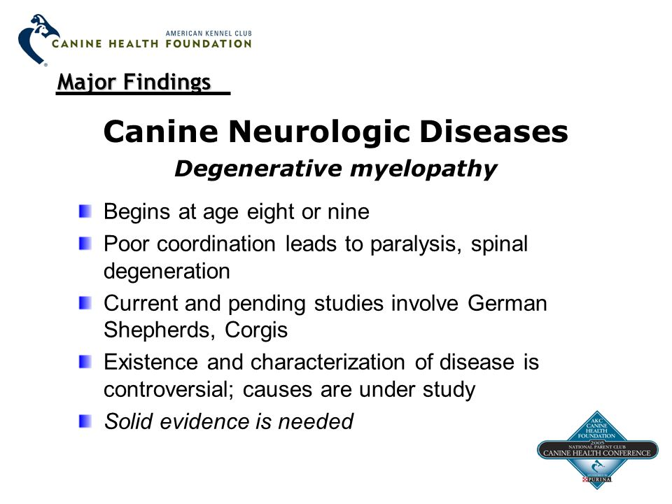 Major Findings Canine Neurologic Diseases Degenerative myelopathy Begins at age eight or nine Poor coordination leads to paralysis, spinal degeneration Current and pending studies involve German Shepherds, Corgis Existence and characterization of disease is controversial; causes are under study Solid evidence is needed