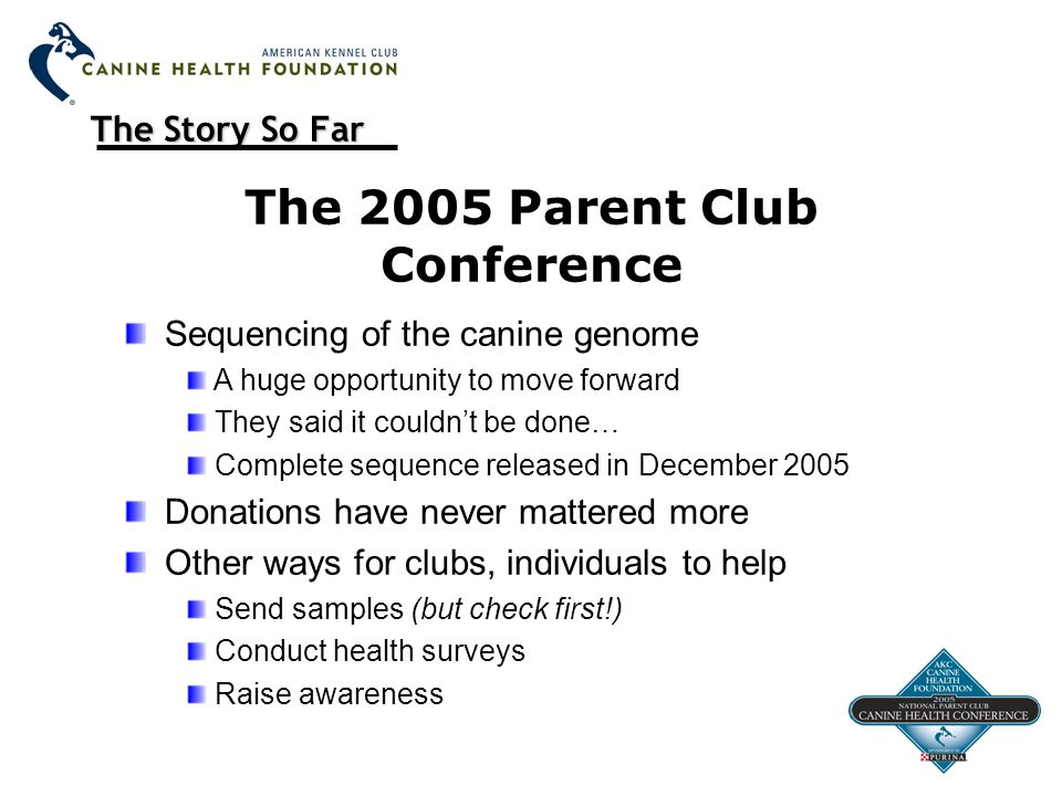 The Story So Far The 2005 Parent Club Conference Sequencing of the canine genome A huge opportunity to move forward They said it couldn't be done… Complete sequence released in December 2005 Donations have never mattered more Other ways for clubs, individuals to help Send samples (but check first!) Conduct health surveys Raise awareness