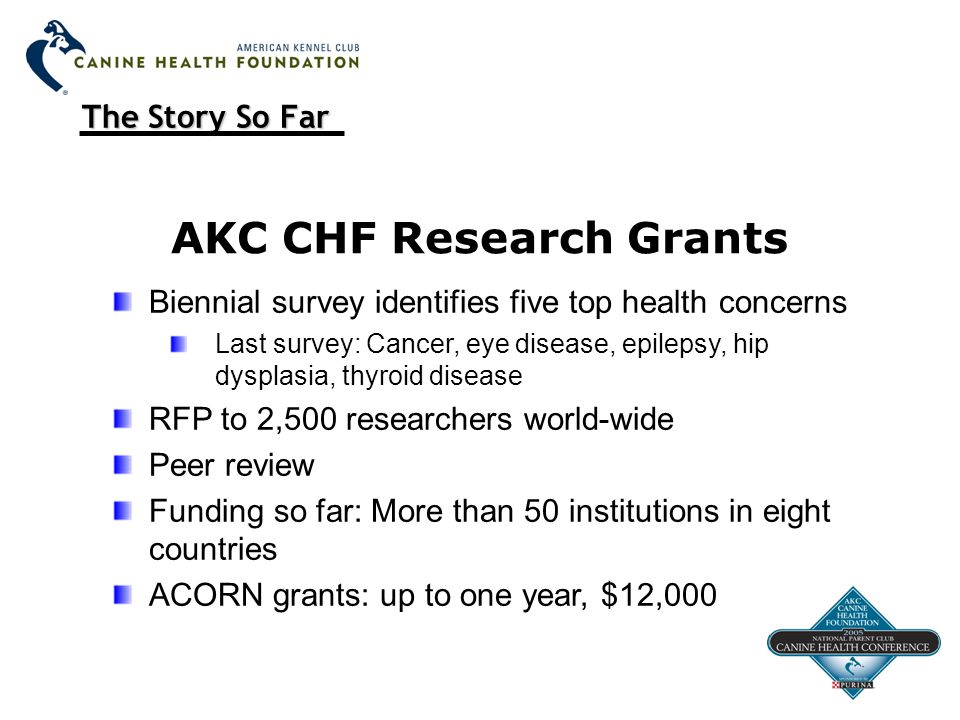 The Story So Far AKC CHF Research Grants Biennial survey identifies five top health concerns Last survey: Cancer, eye disease, epilepsy, hip dysplasia, thyroid disease RFP to 2,500 researchers world-wide Peer review Funding so far: More than 50 institutions in eight countries ACORN grants: up to one year, $12,000