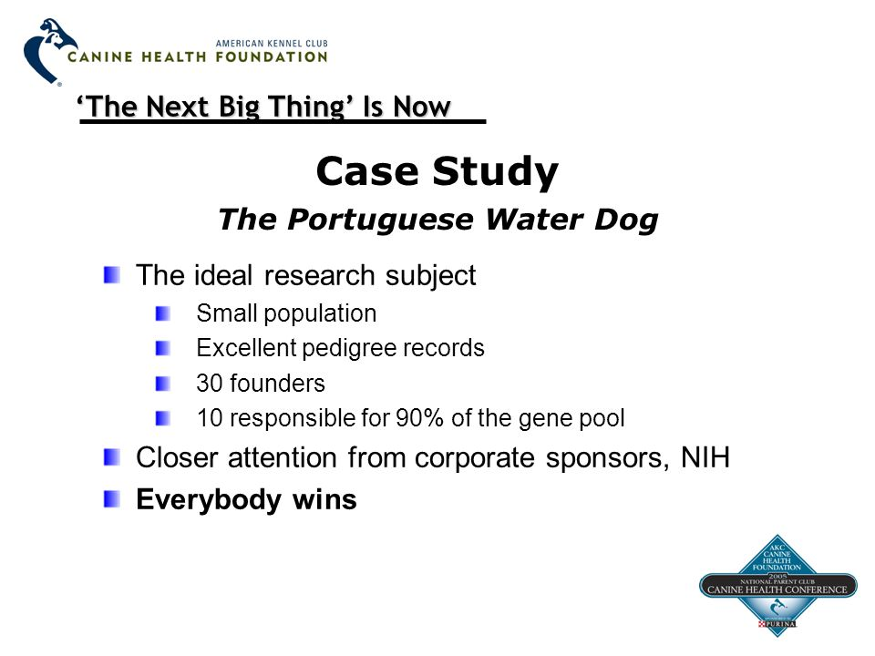 'The Next Big Thing' Is Now Case Study The Portuguese Water Dog The ideal research subject Small population Excellent pedigree records 30 founders 10 responsible for 90% of the gene pool Closer attention from corporate sponsors, NIH Everybody wins