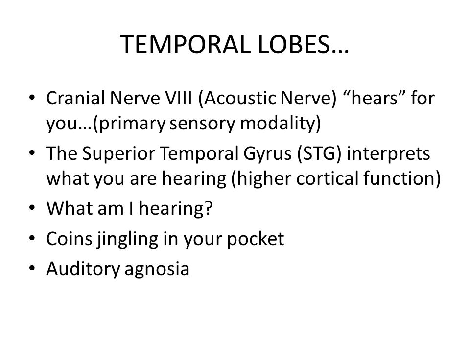 """TEMPORAL LOBES… Cranial Nerve VIII (Acoustic Nerve) """"hears"""" for you…(primary sensory modality) The Superior Temporal Gyrus (STG) interprets what you a"""