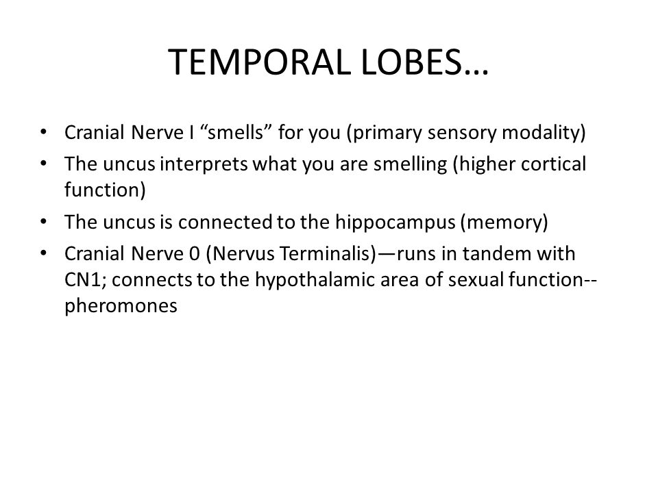 """TEMPORAL LOBES… Cranial Nerve I """"smells"""" for you (primary sensory modality) The uncus interprets what you are smelling (higher cortical function) The"""