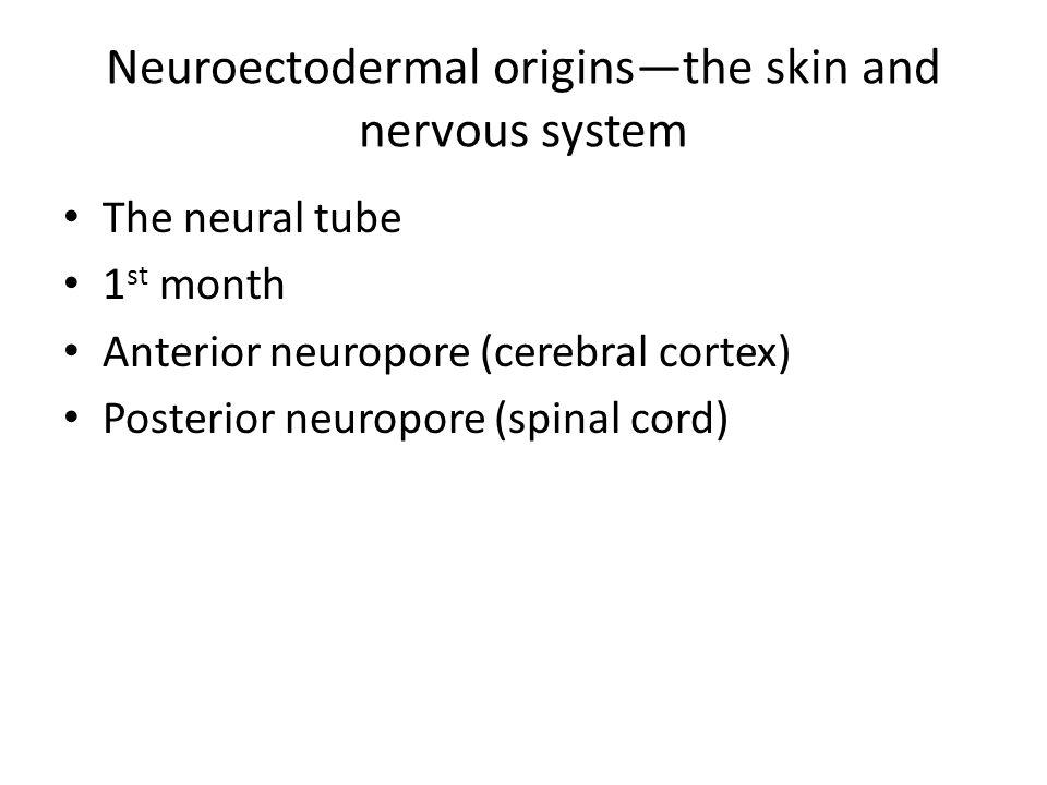 Anterior neuropore defects… Anencephaly Encephalocele
