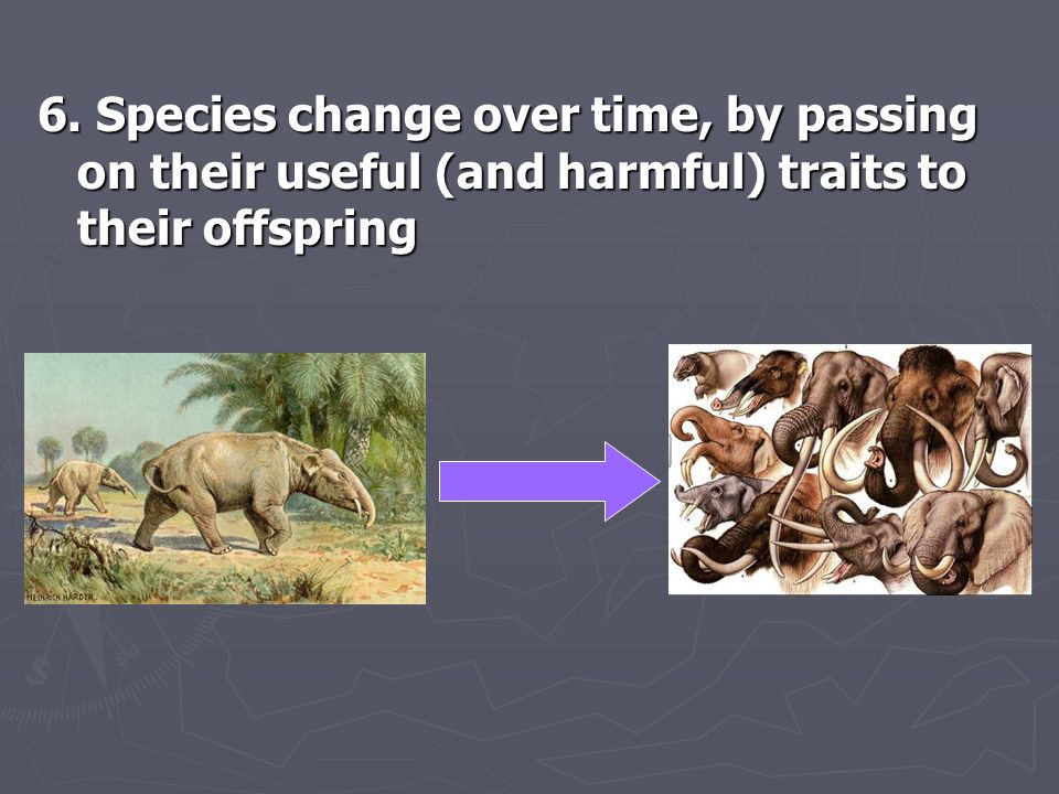 6. Species change over time, by passing on their useful (and harmful) traits to their offspring