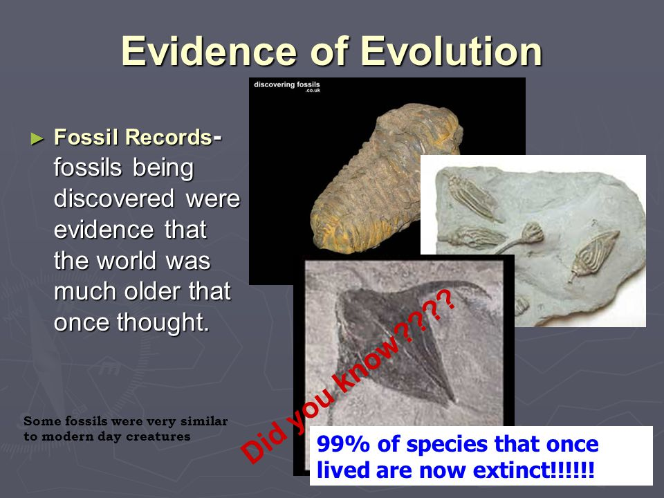 Evidence of Evolution ► Fossil Records - fossils being discovered were evidence that the world was much older that once thought. 99% of species that o