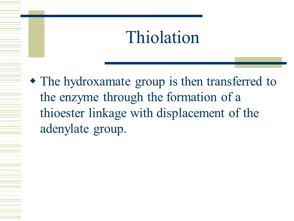 Thiolation  The hydroxamate group is then transferred to the enzyme through the formation of a thioester linkage with displacement of the adenylate group.