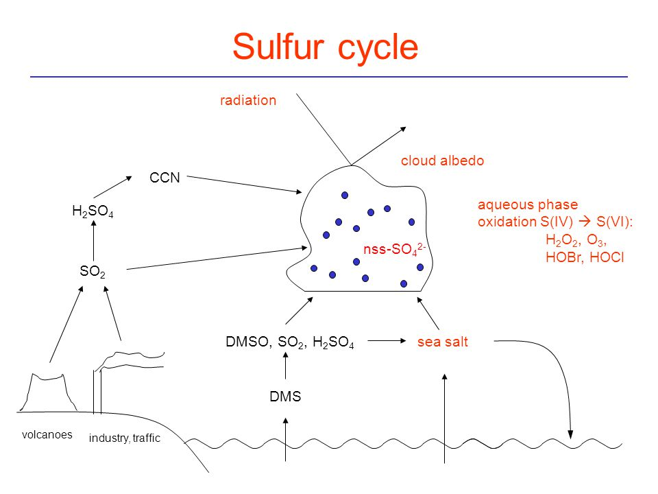 Sulfur cycle volcanoes industry, traffic SO 2 H 2 SO 4 CCN radiation aqueous phase oxidation S(IV)  S(VI): H 2 O 2, O 3, HOBr, HOCl cloud albedo nss-SO 4 2- DMS DMSO, SO 2, H 2 SO 4 sea salt