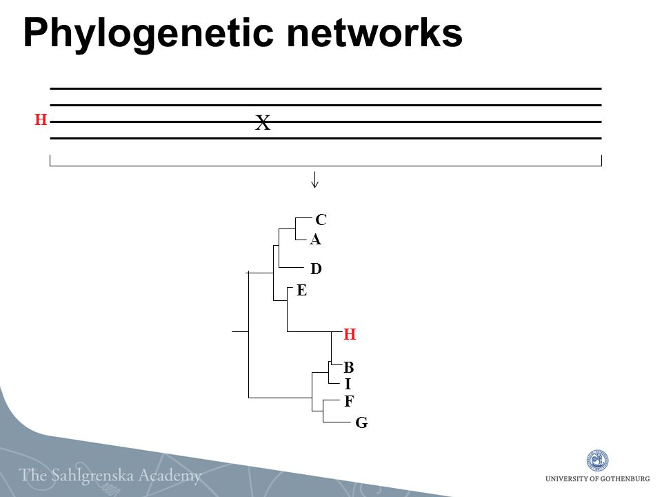 Phylogenetic networks X A B C D E F G H I H