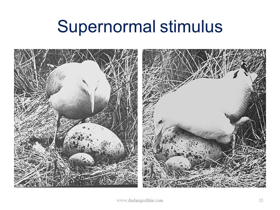 Supernormal stimulus www.dadangsolihin.com35