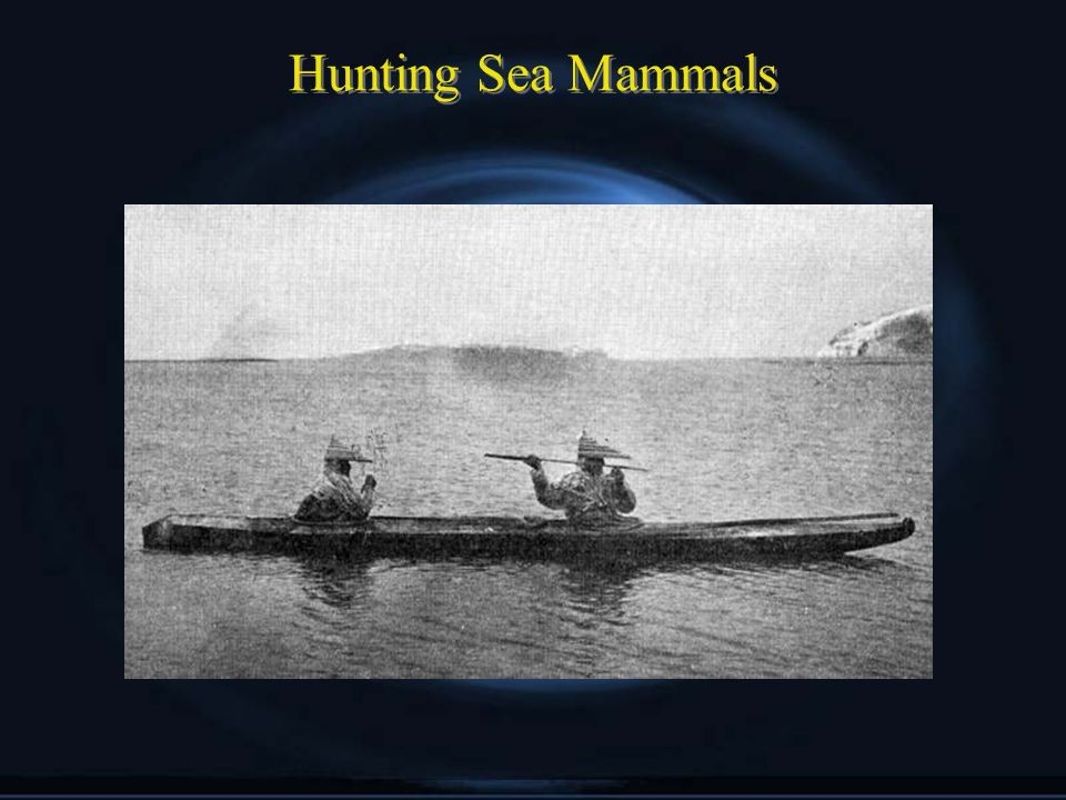 Hunting Sea Mammals