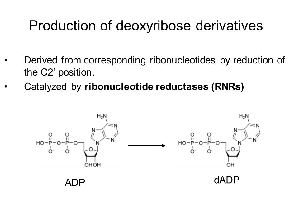 Production of deoxyribose derivatives Derived from corresponding ribonucleotides by reduction of the C2' position. Catalyzed by ribonucleotide reducta
