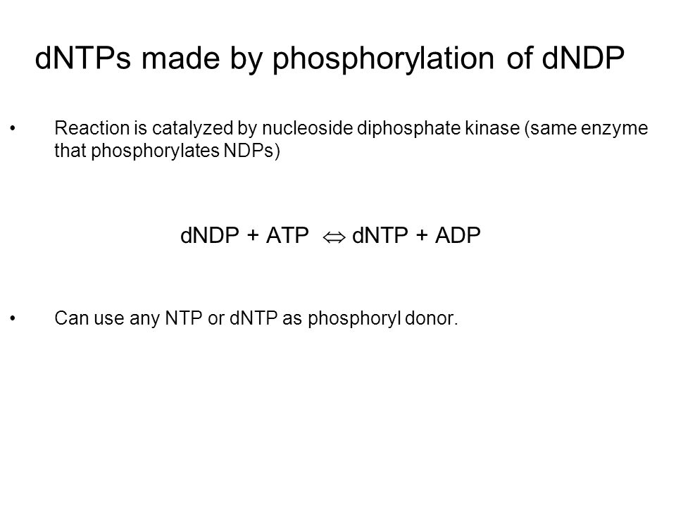 dNTPs made by phosphorylation of dNDP Reaction is catalyzed by nucleoside diphosphate kinase (same enzyme that phosphorylates NDPs) dNDP + ATP  dNTP