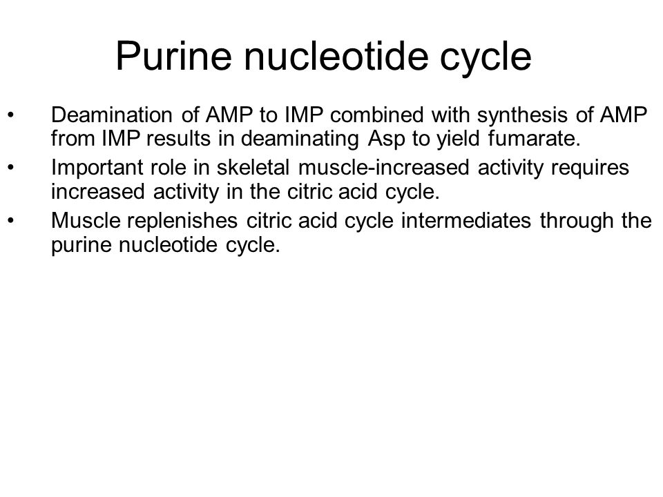 Purine nucleotide cycle Deamination of AMP to IMP combined with synthesis of AMP from IMP results in deaminating Asp to yield fumarate. Important role