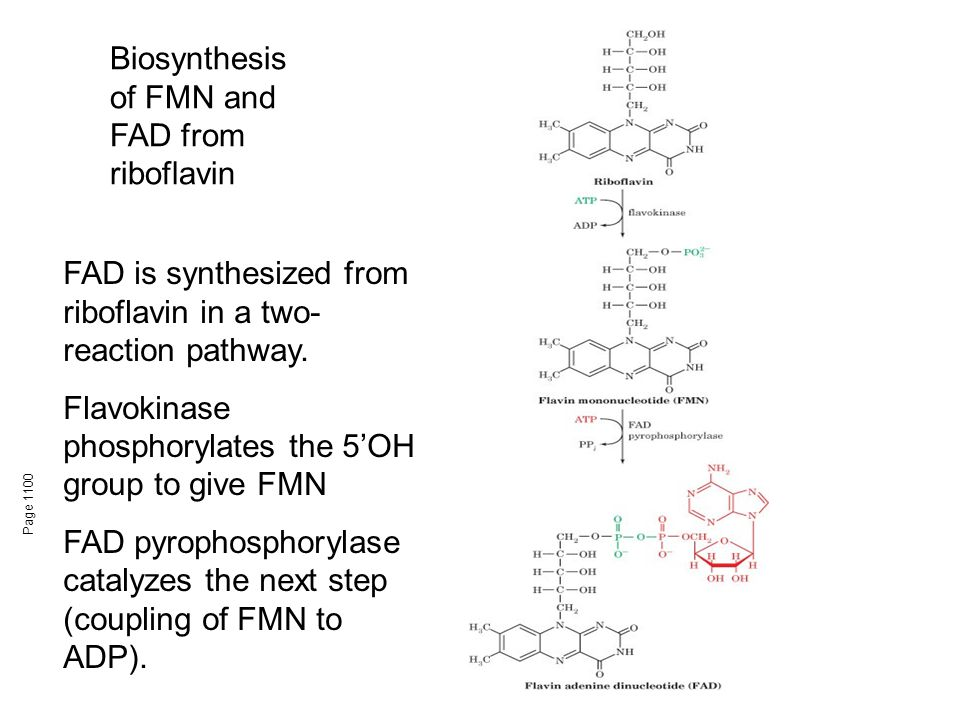 Page 1100 Biosynthesis of FMN and FAD from riboflavin FAD is synthesized from riboflavin in a two- reaction pathway. Flavokinase phosphorylates the 5'