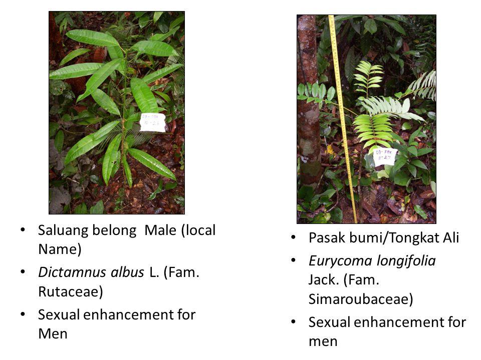Saluang belong Male (local Name) Dictamnus albus L.