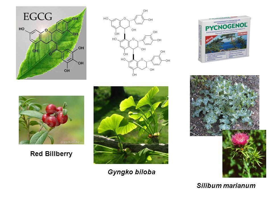 Red Billberry Gyngko biloba Silibum marianum