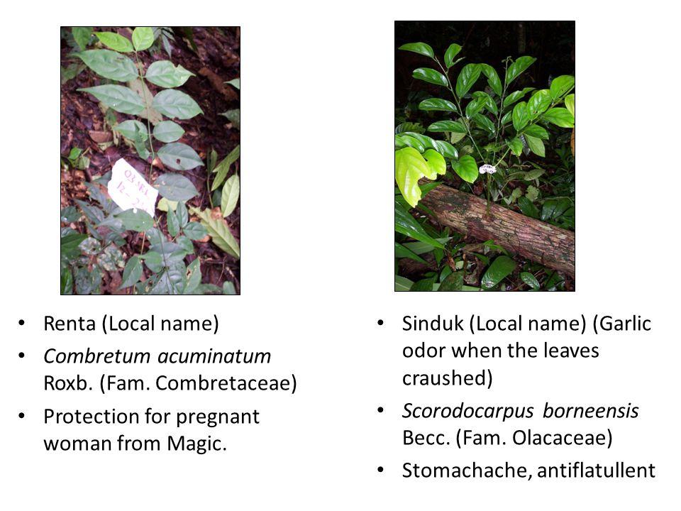 Renta (Local name) Combretum acuminatum Roxb. (Fam.