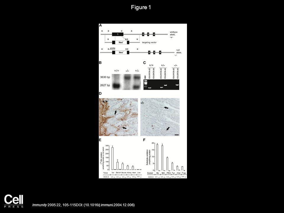 Figure 1 Immunity 2005 22, 105-115DOI: (10.1016/j.immuni.2004.12.006)