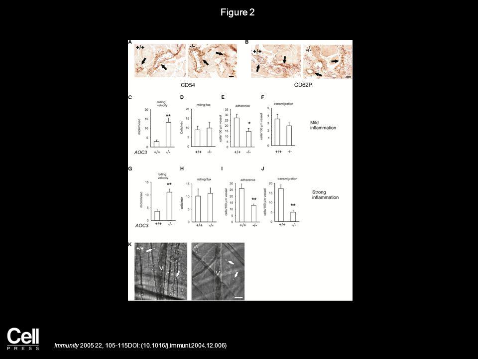Figure 2 Immunity 2005 22, 105-115DOI: (10.1016/j.immuni.2004.12.006)