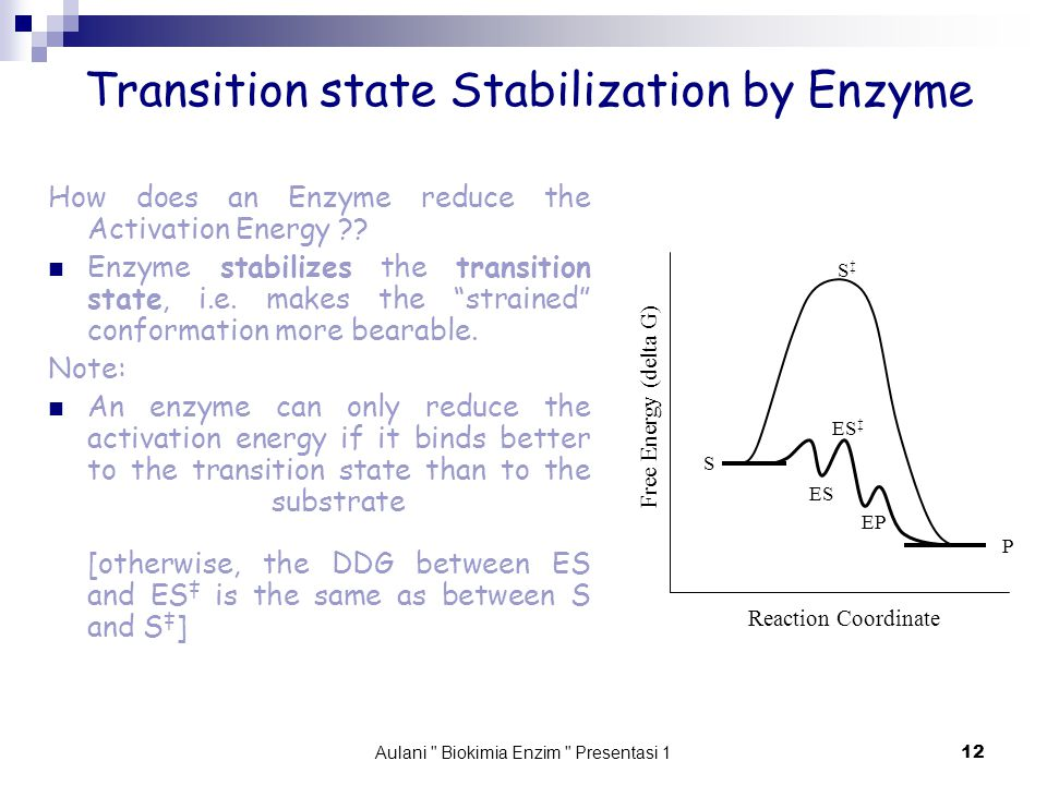 Aulani Biokimia Enzim Presentasi 1 12 Transition state Stabilization by Enzyme How does an Enzyme reduce the Activation Energy .