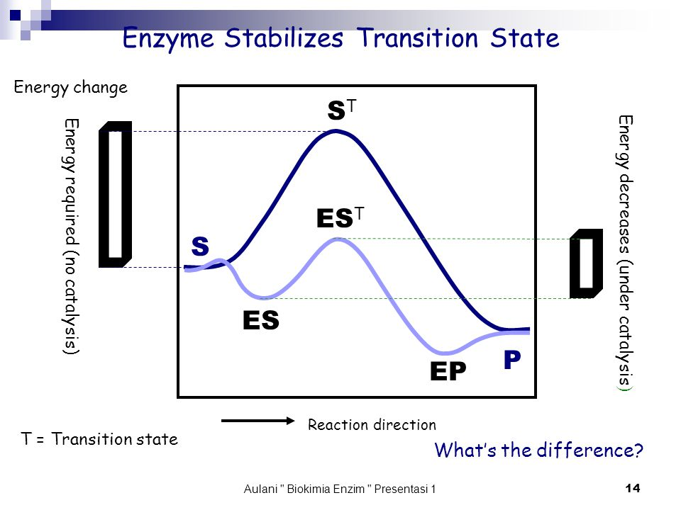 Aulani Biokimia Enzim Presentasi 1 14 Enzyme Stabilizes Transition State S P ES ES T EP STST Reaction direction Energy change Energy required (no catalysis) Energy decreases (under catalysis ) What's the difference.