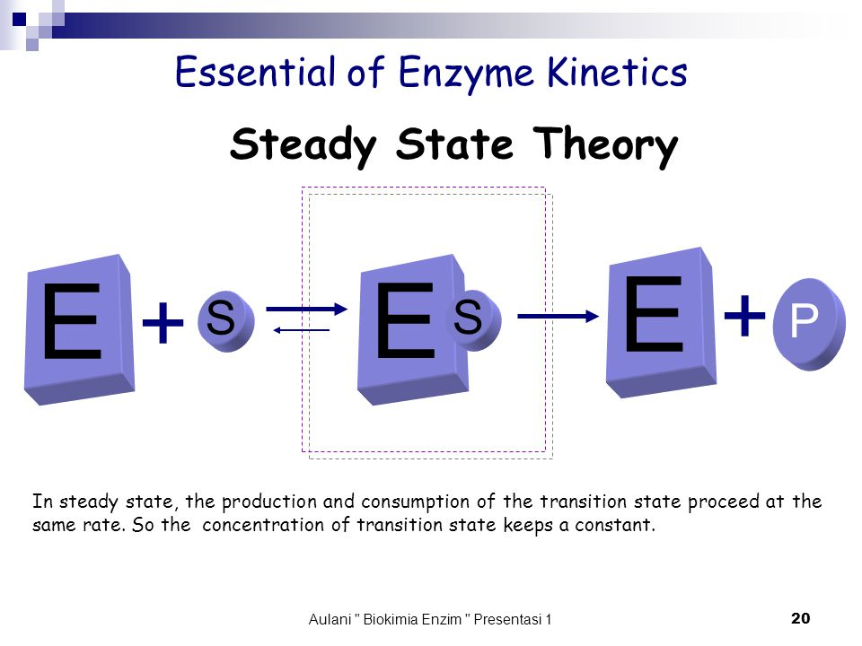 Aulani Biokimia Enzim Presentasi 1 20 Essential of Enzyme Kinetics E S + P + Steady State Theory In steady state, the production and consumption of the transition state proceed at the same rate.