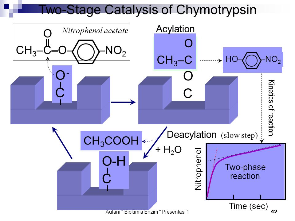 Aulani Biokimia Enzim Presentasi 1 42 O -CO -C Time (sec) Nitrophenol Two-Stage Catalysis of Chymotrypsin O CH 3 –C–O– –NO 2 Nitrophenol acetate OCOC O CH 3 –C HO– –NO 2 + H 2 O O-H C CH 3 COOH Kinetics of reaction Two-phase reaction Acylation Deacylation (slow step)
