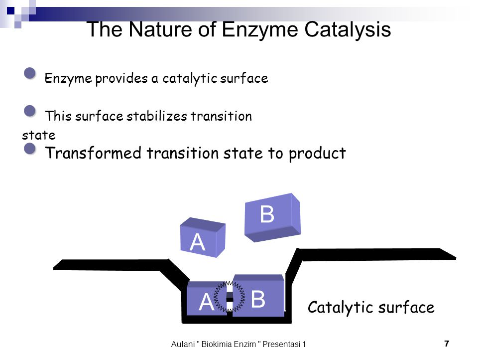 Aulani Biokimia Enzim Presentasi 1 7 The Nature of Enzyme Catalysis ● ● Enzyme provides a catalytic surface ● ● This surface stabilizes transition state ● ● Transformed transition state to product B B A Catalytic surface A