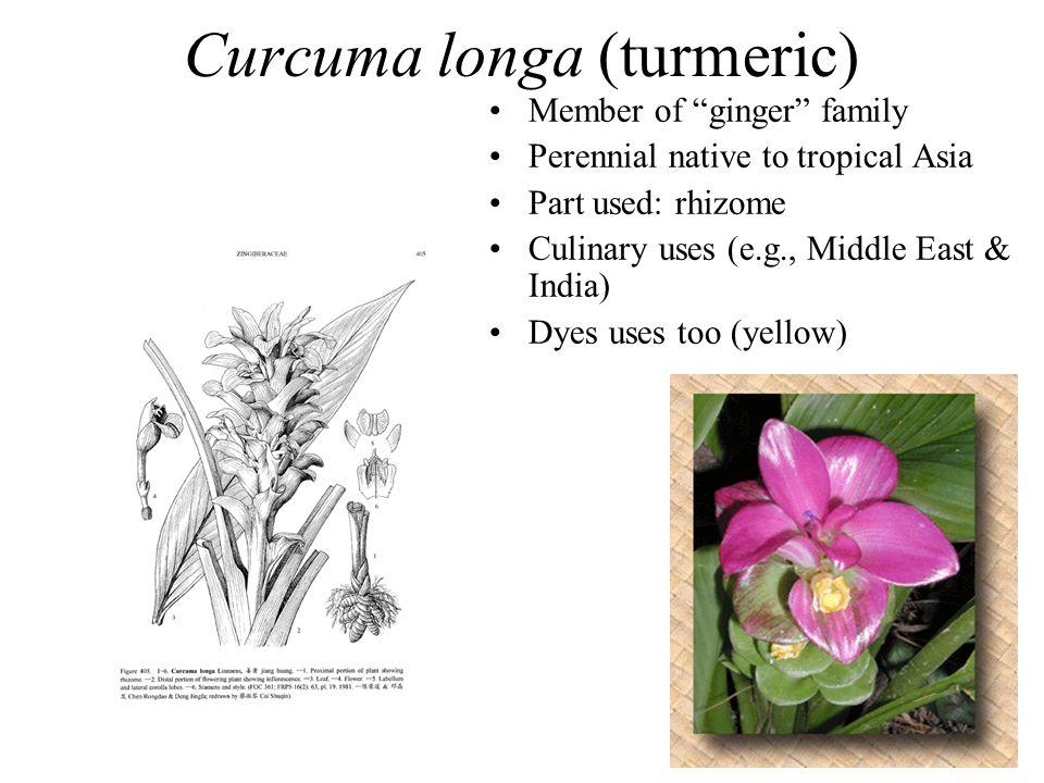 "Curcuma longa (turmeric) Member of ""ginger"" family Perennial native to tropical Asia Part used: rhizome Culinary uses (e.g., Middle East & India) Dyes"