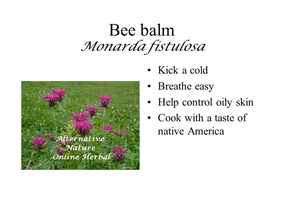 Bee balm Monarda fistulosa Kick a cold Breathe easy Help control oily skin Cook with a taste of native America