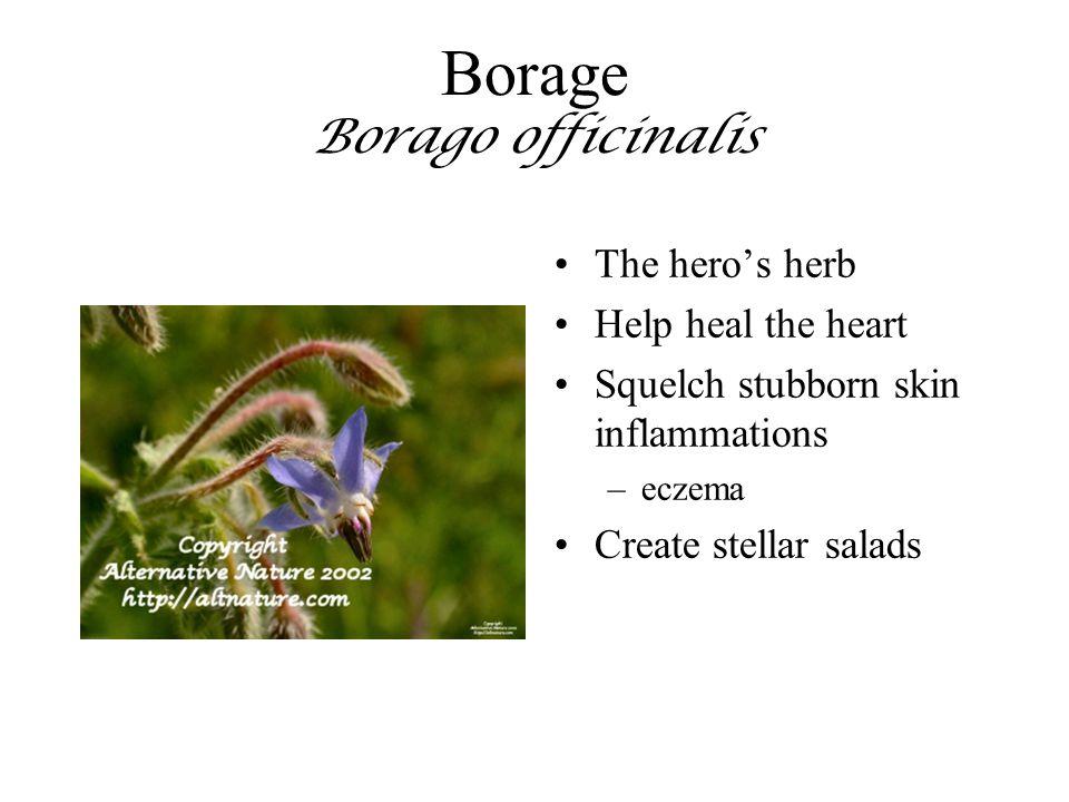 Borage Borago officinalis The hero's herb Help heal the heart Squelch stubborn skin inflammations –eczema Create stellar salads