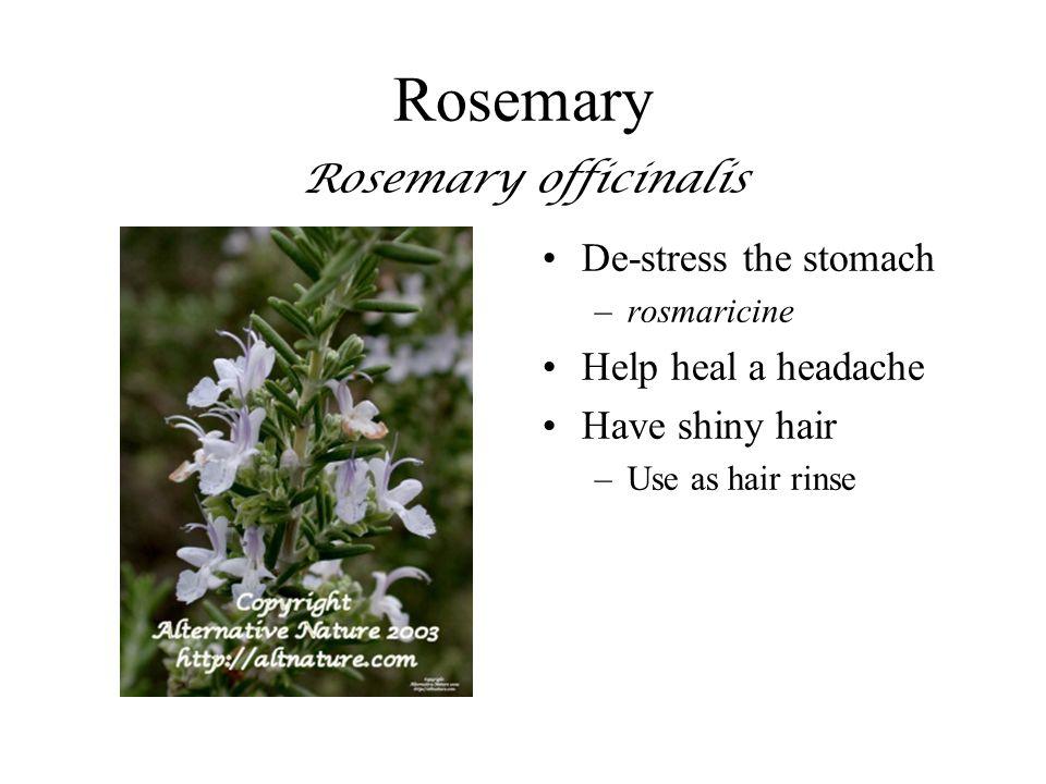 Rosemary Rosemary officinalis De-stress the stomach –rosmaricine Help heal a headache Have shiny hair –Use as hair rinse