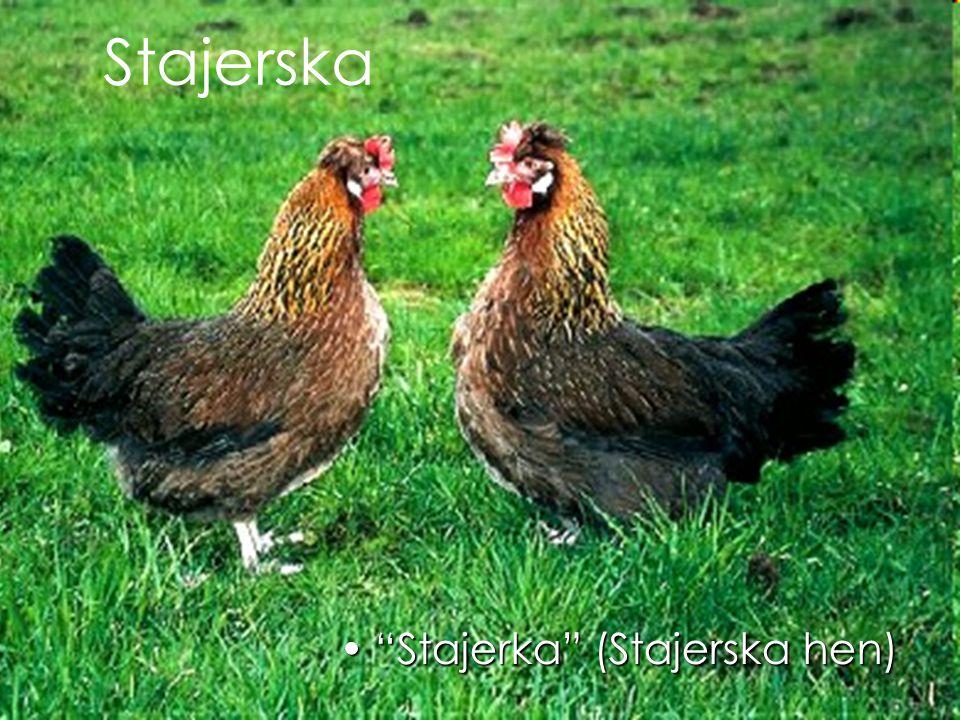 Stajerska Stajerka (Stajerska hen) Stajerka (Stajerska hen)