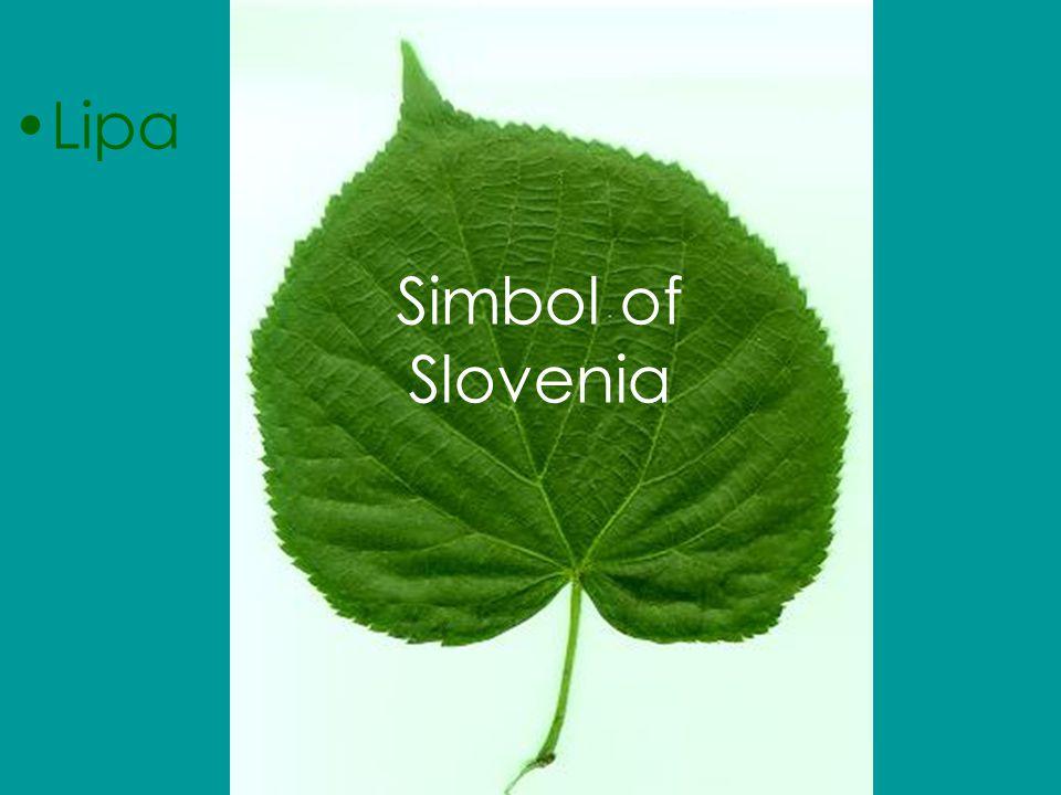 Simbol of Slovenia Lipa